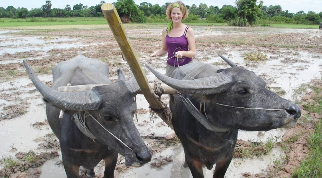 クメール文化体験ボランティアが伝統的な手法でカンボジアの農耕地を耕す
